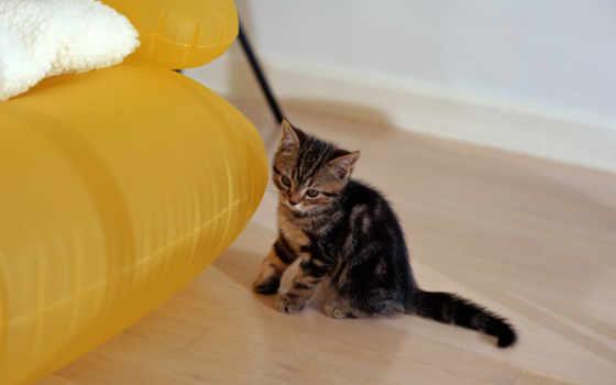 животные, кошки Фон № 6308 разрешение 1600x1200