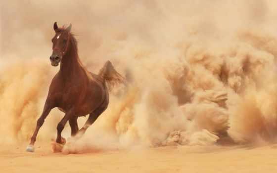 бег, лошадь, кон, песок, пыль, бежит,