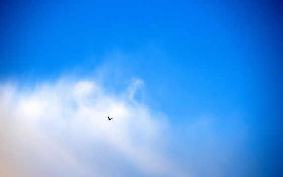 облака, птица