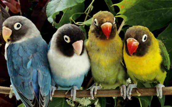 фотографий, природа, птиц