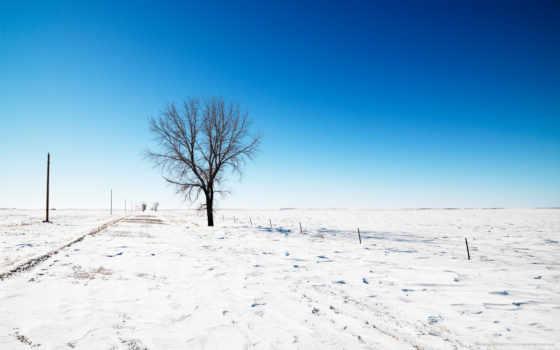 winter, снег, дерево Фон № 121686 разрешение 2560x1600