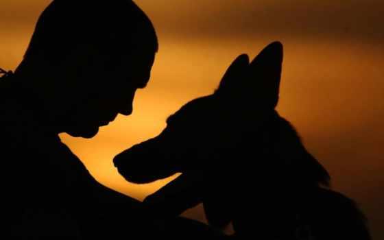 собака, силуэт, мужчина, paws, dogs, закат, has,