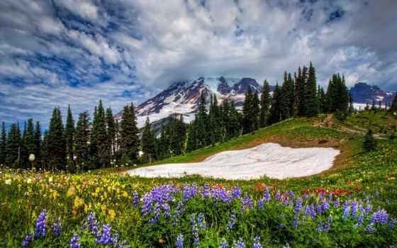 весна, ранняя, февр, цветы, фв, цитата, lipa, информация,