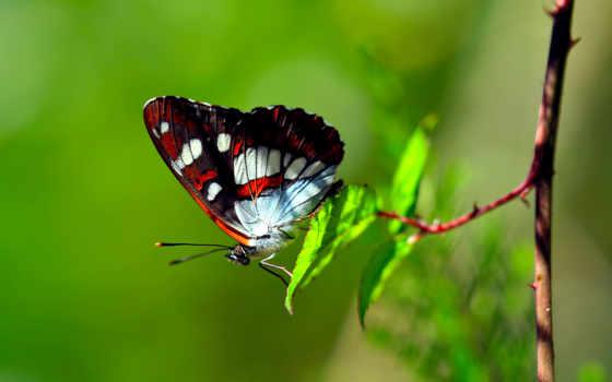 бабочки, бабочками, butterflies, красивые, сегодня, зарядимся, бабочка, красивых, фотографий, позитивом,