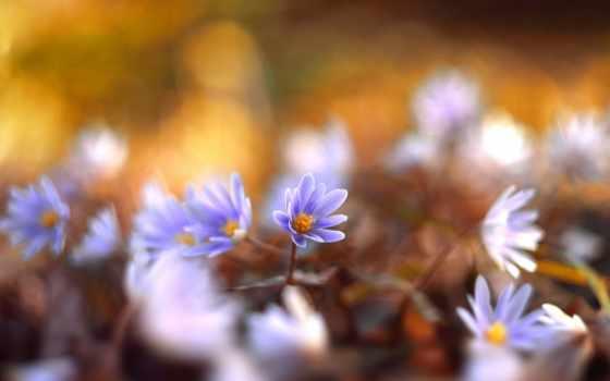 flowers, yayoi, вдохнуть, небо, sakurai,