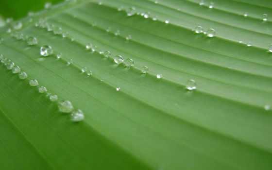 bananeira, folha, fuma, rastafari, ites, rasta, livre, mercado, gathering,