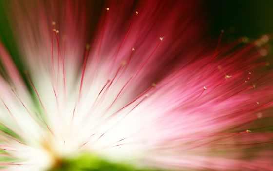 цветы, garden, растение, весна, природа, free, royalty, голова, кот,