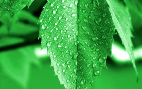 роса, листва, drop, красивый, трава, фото, water