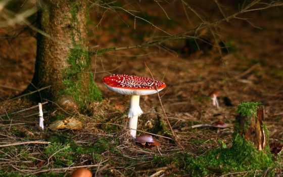 макро, красная, осень, деревья, грибы, лес, листва,