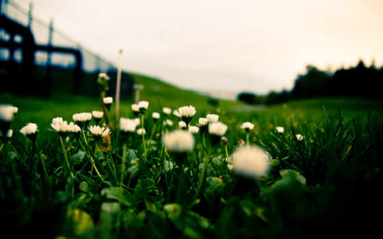 трава, макро, цветы