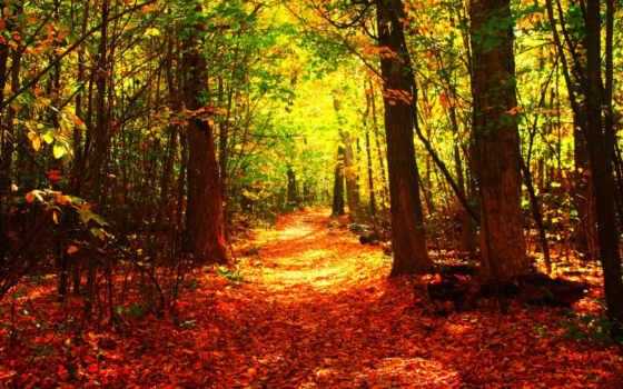 дерево, природа, leaf, картинка, осень, оранжевый, времена, года, деревя, desktop,