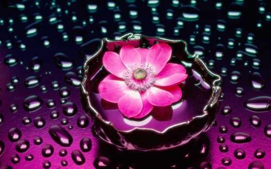 цветы, water, розовые