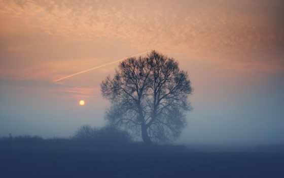 закат, туман, поле, sun, дерево, вечер, природа,
