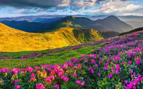 альпы, луга, slovenia, природа, горы, azalea, высоком, качестве, экрана, meadows,