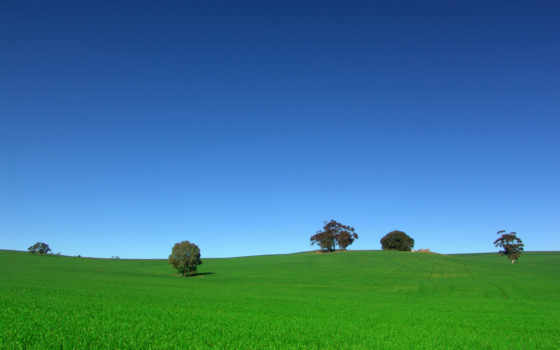 поле, небо, зеленое, море, everything, природа,