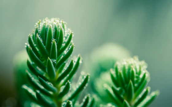 flowers, full, зеленое, daisy, free,