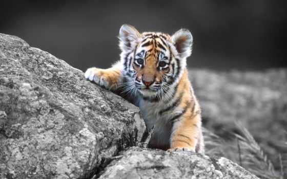 кошки, кот, детёныш, тигр, камне, бесплатные, малыш, коты, банка,