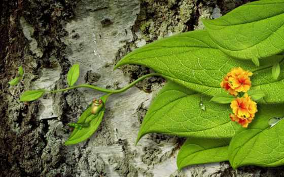 природа, free, desktop, листва, амфибии, фон,