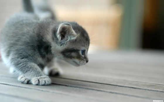 кот, разглядывает, цыпленка, cats, забавные, рисунок, payphone, handicraft, uslugu,