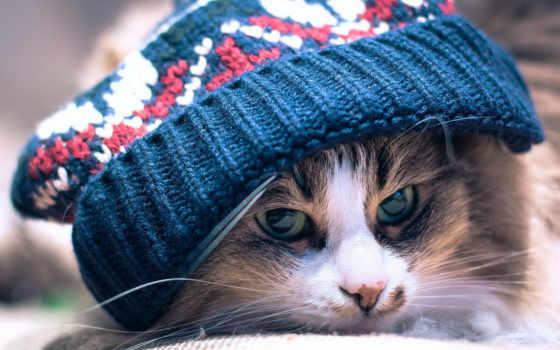 кот, шапке, лежит, вязанной, шапкой, под, хмурый,
