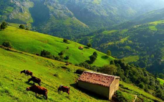 взгляд, hills, трава, mountains, trees, cow, природа, landscape, house