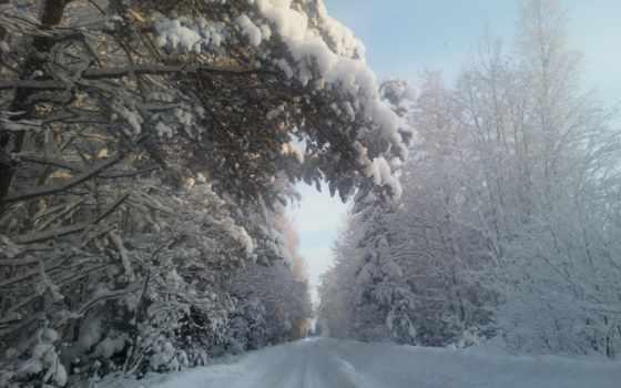 дорога, лесу, зимнем
