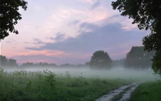 дорога, природа, лес
