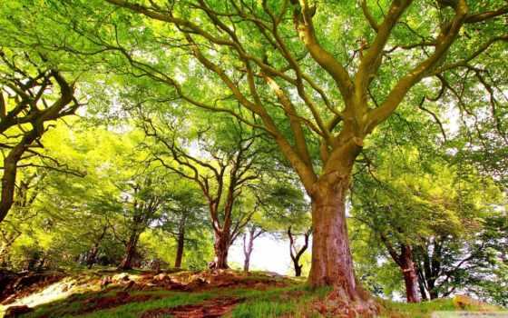 trees, лес, леса, лесу, смартфонов, ios, планшетов, android, rabstol, ваше, trail,