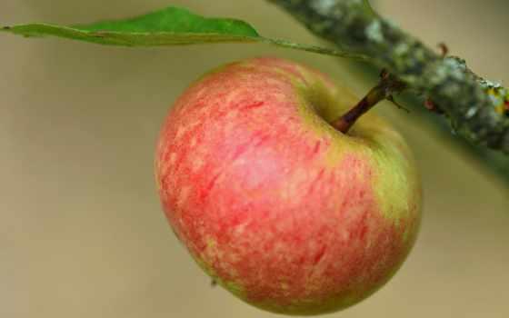 makro, макро, фрукты, apple,
