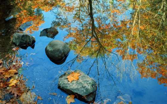осень, воде, отражение, осени, отражается, reki, trees, моря,