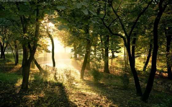 природа, высокого, природы, качества, приколы, лес, разрешения,
