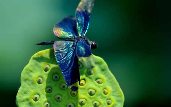 other, animals, high, cute, best, hewan, fuliginosa, blue, зелёный,
