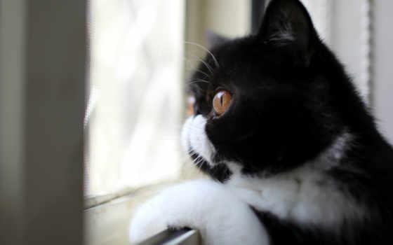 кошки, уже, many,