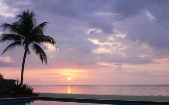 palm, закат, бассейн, sun, rising, отражение, небо, море, пляж, вечер, сумерки
