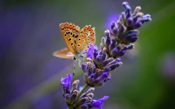 lavender, тв, servilleta, лаванда, цена, low, декупаж, картинка, доставка, гарантия, eldorado
