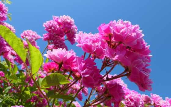 freitag, wochenende, morgen, guten, bild, angenehmes, pixabay, цветы, schöne, liebe