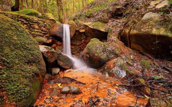 природа, лес Фон № 25048 разрешение 1920x1200