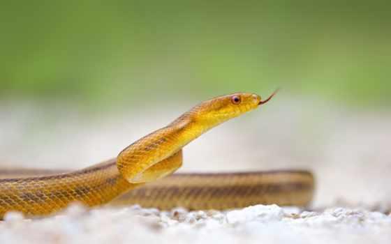 snake, www, imagetext