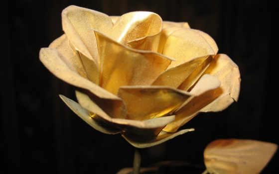 gold, роза