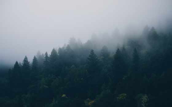 лес, trees, browse, осень, озеро, туман,