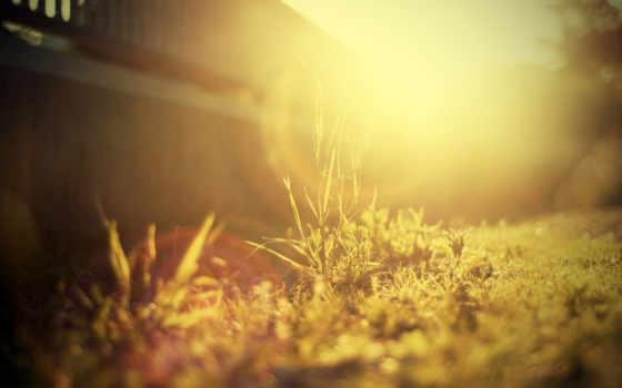 трава, sun, свет, кол, материалов,