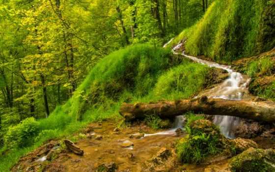 природа, лес, ручей, trees, трава, ствол, леса,