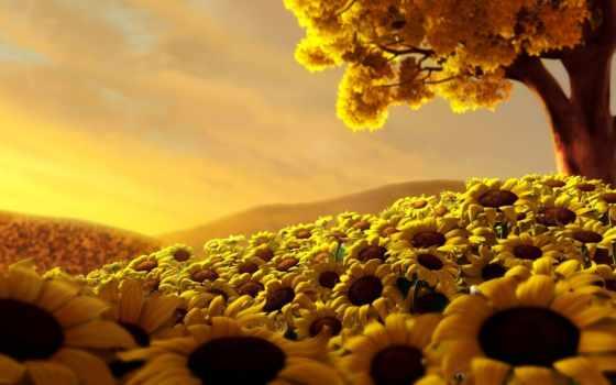 подсолнухи, summer, поле, share, сорт, залевский, сергей, фотографий,