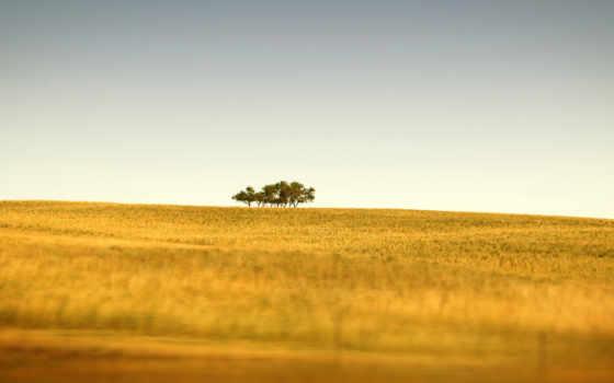 природа, горизонт, поле, трава, trees, cvety, дерево