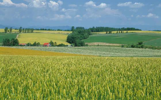 ферма, scenery, landscape