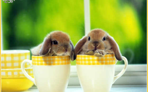кролики, krolik, декоративные