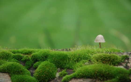 mushroom, мох, природа, взгляд, зелёный, размытие,