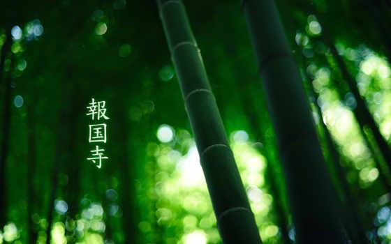 иероглифы, бамбук, colour, зелёный, лес, burningmonk,
