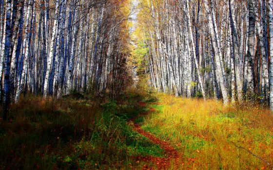 paisajes, bosques, ciudades, fondos, chicas, naturaleza, ciencia, unique, ficción, imágenes,