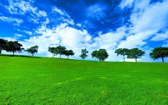 trees, луг, landscape, горизонт, трава, oblaka, природа, summer, зелёный, range,